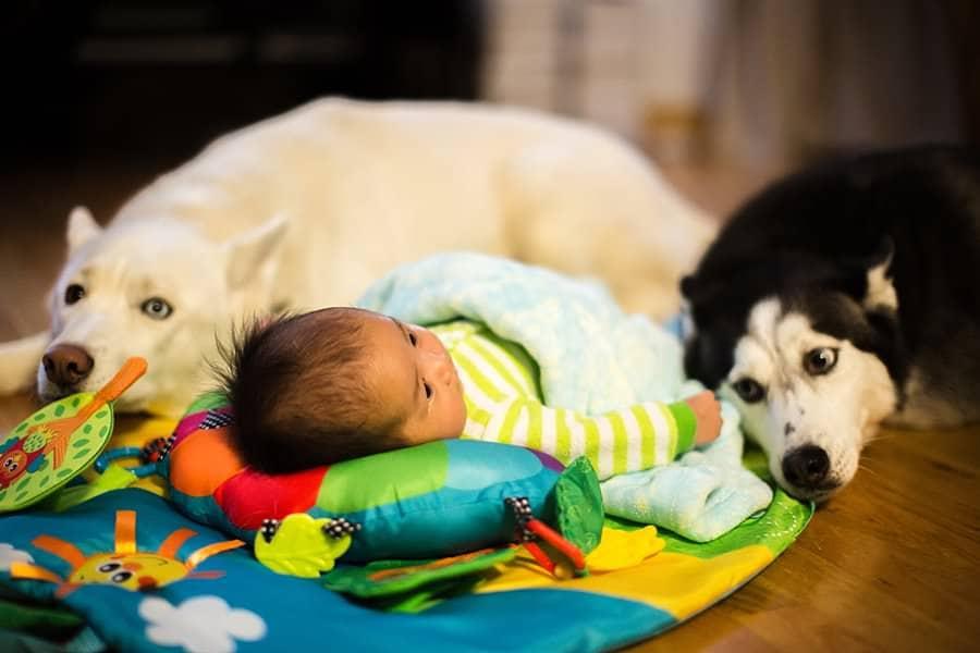 babies-with-huskies_0023
