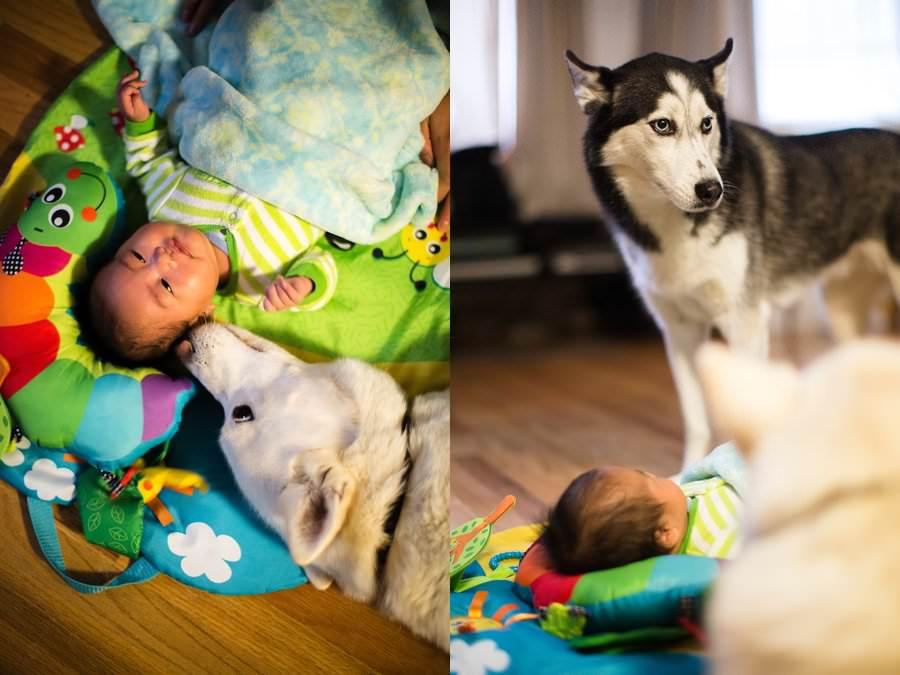 babies-with-huskies_0025