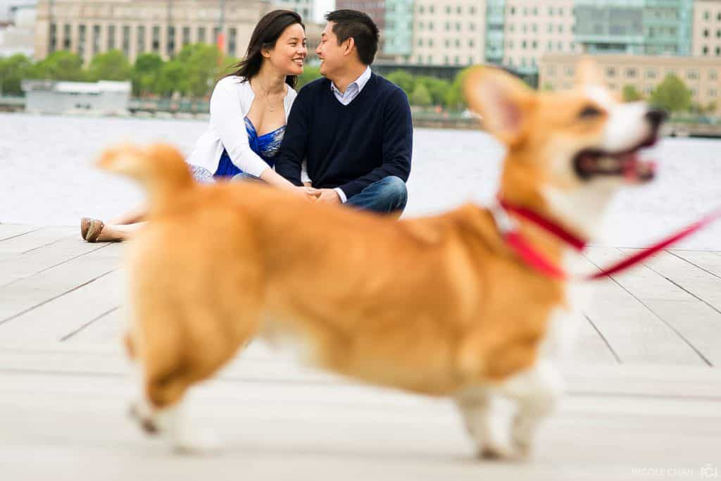 Corgi Boston Charles River engagement photos