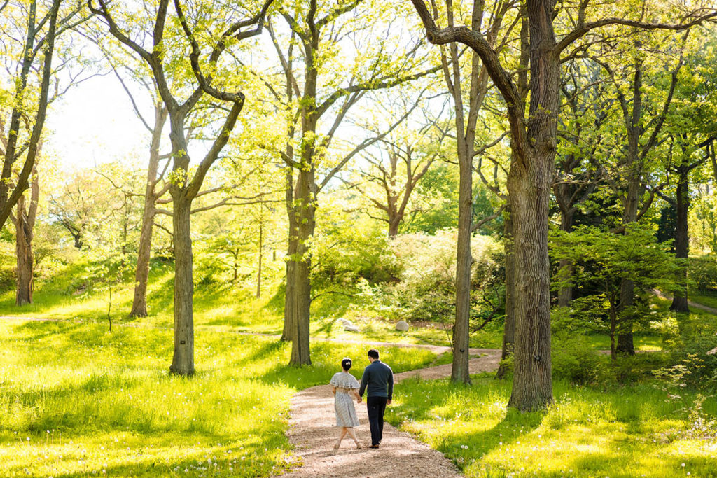 Couple walking through tall trees at the Arnold Arboretum